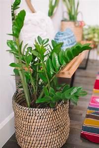 7, Common, Houseplants, Air
