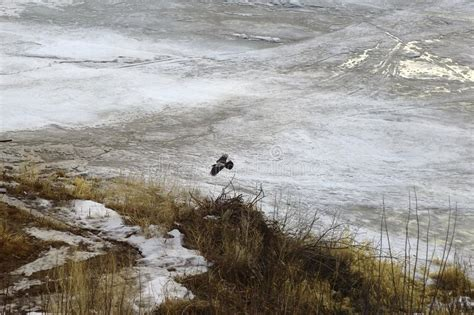 kite  ground stock photo image   fall wind