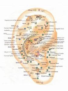 13 Best Images About Auriculotherapy On Pinterest