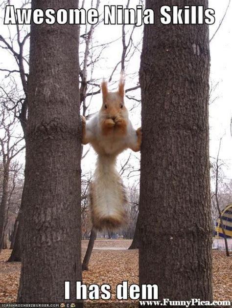 Funny Squirrel Memes - funny squirrel meme