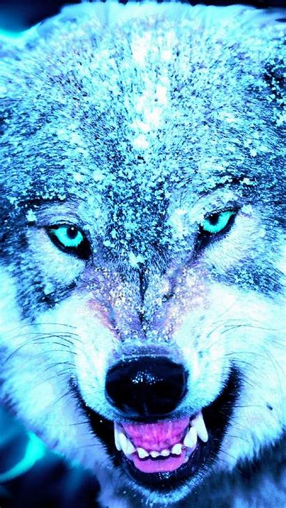 Wolf Cool Iphone Wallpapers Resolution Backgrounds Screensaver