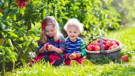 fruit farms australia fun kids guide