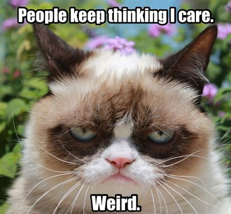 Angry Cat Meme - 60 angry cat funny memes for whatsapp