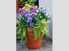Wonderful Winter Garden Containers