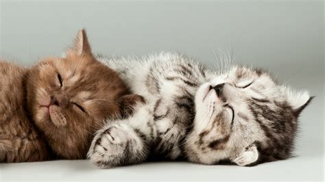 Wallpaper Cats Animals - wallpaper kittens cats hd 4k animals 3908