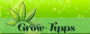 Indoor Grow Anleitung : wie viele pflanzen in den growroom 1000seeds ~ Eleganceandgraceweddings.com Haus und Dekorationen