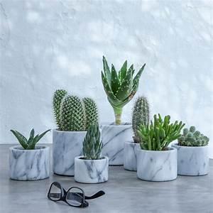 Pot Pour Plante : les 25 meilleures id es concernant cache pots pour plantes grasses sur pinterest pots ~ Teatrodelosmanantiales.com Idées de Décoration
