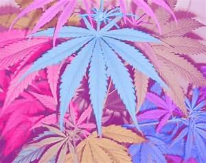 pot leafs on Tumblr