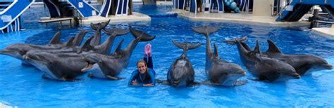 dolphin trainer job descriptioin marine mammal trainer