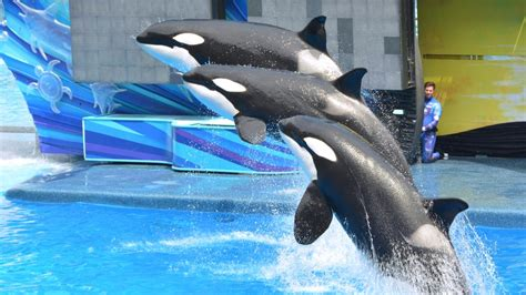 Are you about to make an international long distance phone call to san antonio, texas, united states? SeaWorld San Antonio tapped for company's final orca birth ...