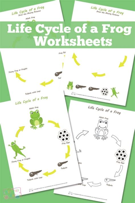 life cycle   frog worksheet itsy bitsy fun
