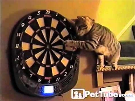 kitty darts  pettube youtube