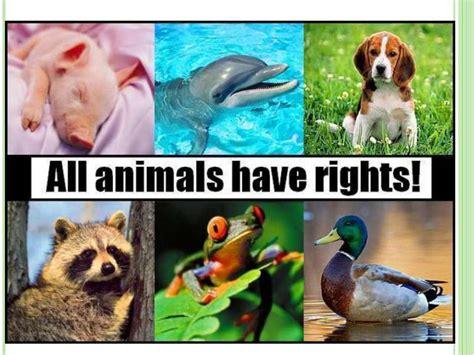 how do animals help humans how do animals help humans essay how do animals help humans essay