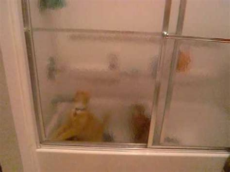 I Watched My Shower - cats in the shower