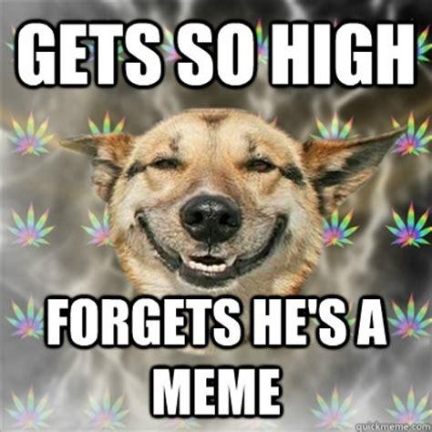 High Dog Meme - the history of stoner memes all things dank