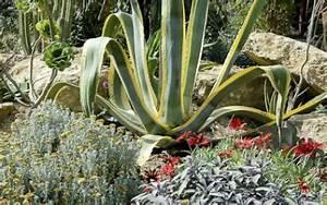 Entretien Plantes Grasses : plantes grasses entretien origine culture gamm vert ~ Melissatoandfro.com Idées de Décoration