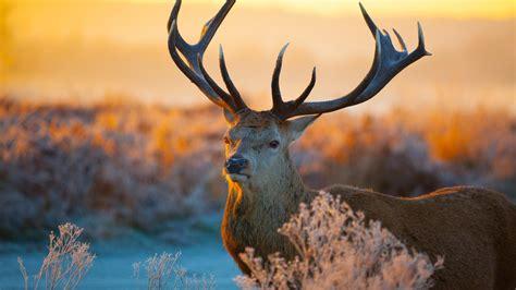 Live Wallpaper Hd Animals - hd tier hintergrundbilder herunterladen