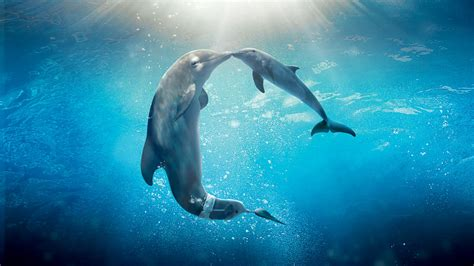 dolphin tale  wallpapers hd wallpapers id