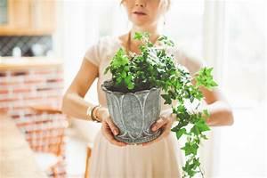 Läuse An Pflanzen : efeu hat l use so behandeln sie ihn richtig ~ One.caynefoto.club Haus und Dekorationen