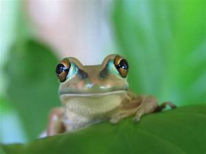 Are Frogs And Toads The Same