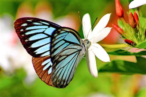 Butterfly Spirit Animal & Totem