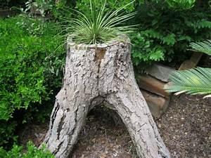 Comment Creuser Un Tronc D Arbre : jardin exotique un tronc d 39 arbre devient un l ment d coratif ~ Melissatoandfro.com Idées de Décoration