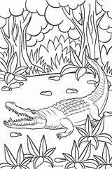 Coloring Pages Alligator Cute Printable Crocodile Cool2bkids Baby Getcolorings Getdrawings sketch template