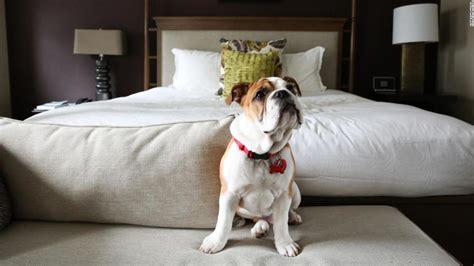 pet friendly hotels 12 of the best around the world cnn