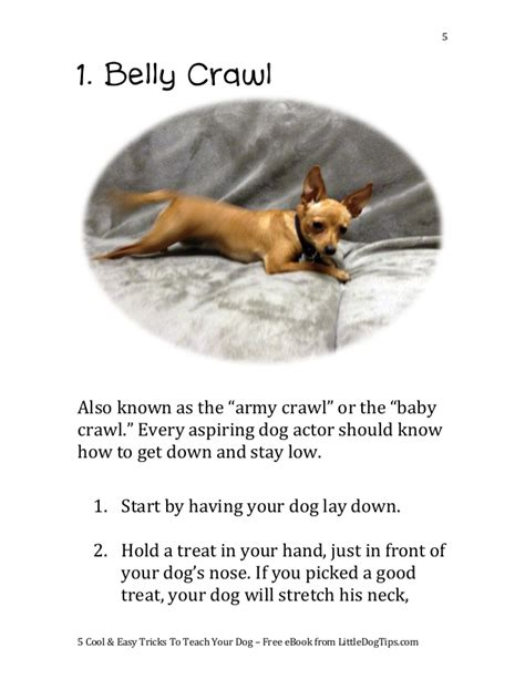 how to dogs 5 cool easy tricks to teach your dog