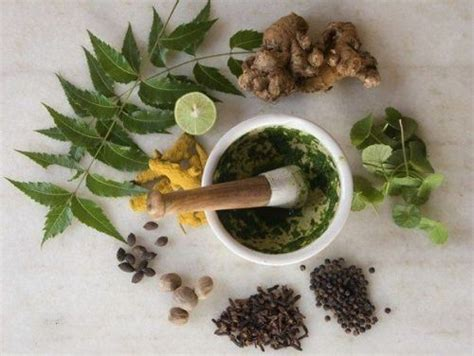 Top 5 Herbs For Beautiful Hair Real Beauty Mother