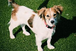 Mixed-Breed Dogs - The 13 Cutest Mixed Breed Dogs