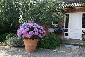 Hortensien überwintern Im Garten : k belpflanzen richtig berwintern garten blog ~ Frokenaadalensverden.com Haus und Dekorationen