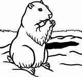 Coloring Groundhog Pages Printable Sheet Template Preschool Animal Adults Getcoloringpages Adult sketch template