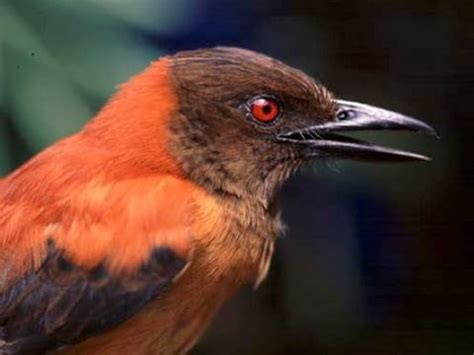 discovery first scientifically confirmed poisonous bird