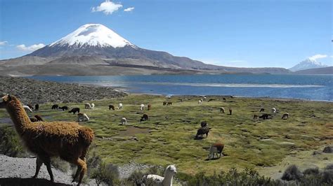 Lauca and Putre National Park, Chile