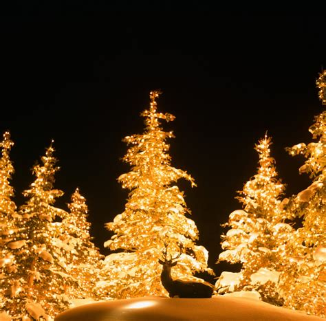 instaliling christmas tree lights residential lights installation utah brite nites