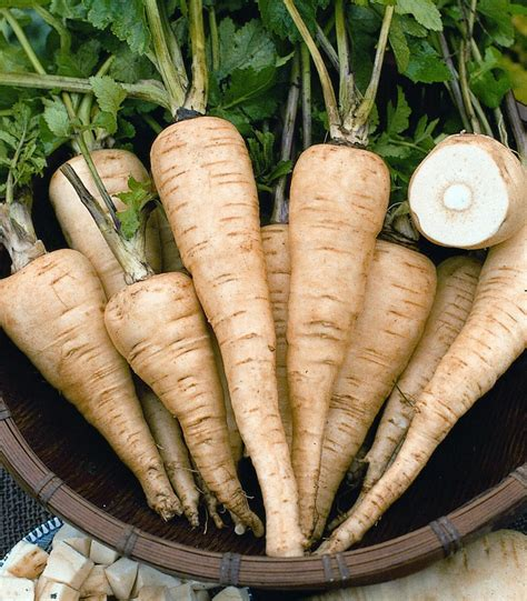 The Parsnip, A Friend Of The Carrot  Canyon News