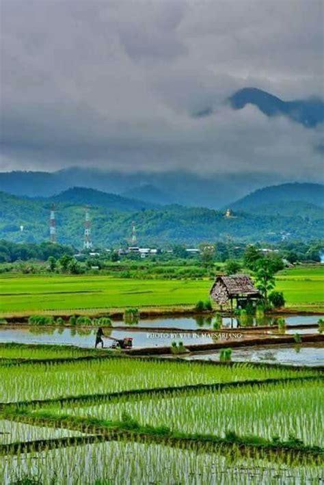 beautiful bangladesh  lush green landscapes bengali