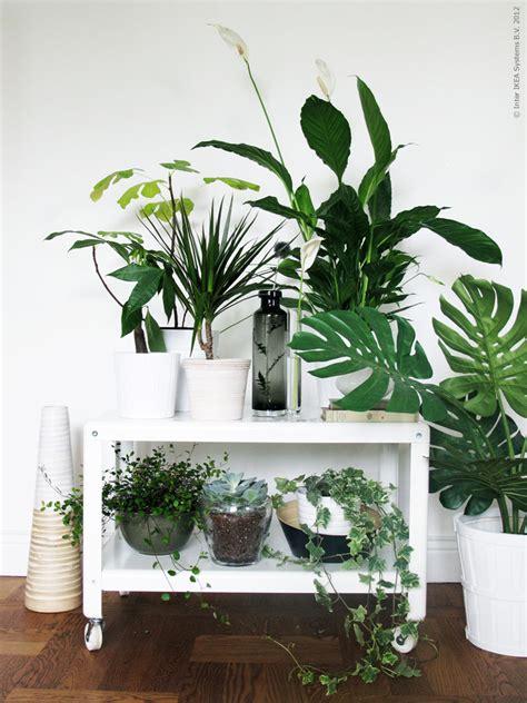 plante verte pour chambre deco chambre interieur plantes vertes