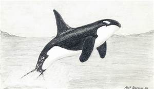 Killer Whale by TigerGod on DeviantArt