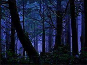 forest at pictures we need