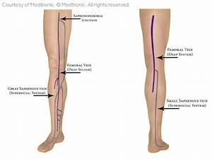 Leg Vein Anatomy 101