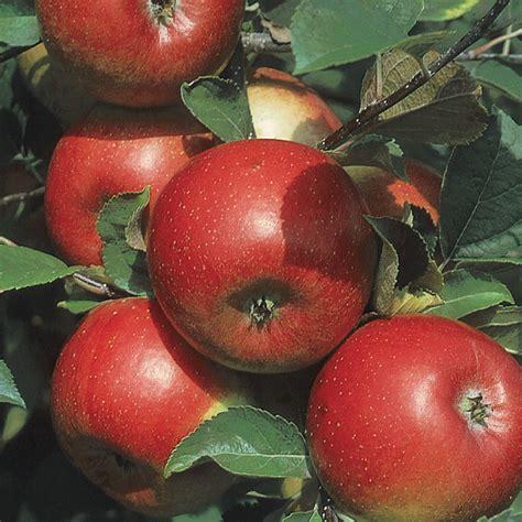 Apple Orchard Ohio