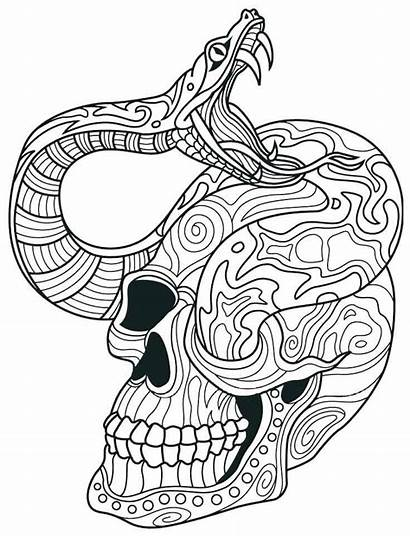 Skull Coloring Pages Sugar Adult Snake Adults