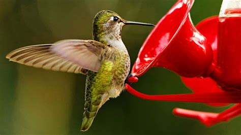 what s the best recipe for hummingbird nectar what s