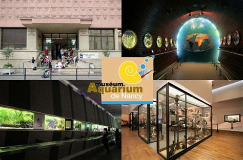 le museum aquarium de nancy les parcs d attractions fran 231 ais