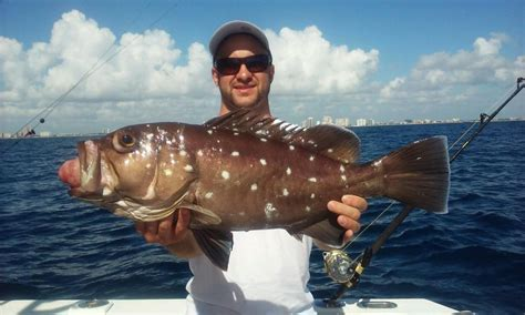 grouper deep snowy fishing dropping crazy lauderdale sea offshore caught ft nice shipwreck fishheadquarters angler happy headquarters