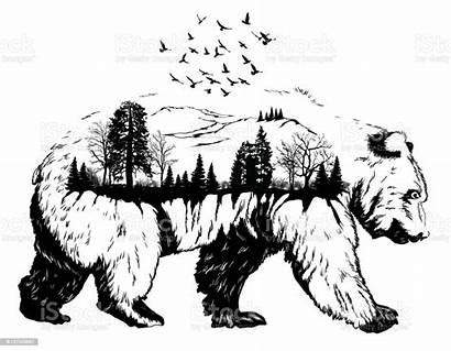 Bear Vector Exposure Double Hand Drawn Wildlife