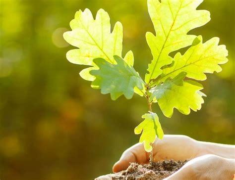 Meža stādīšana rudenī - AgrozemesAgrozemes
