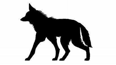 Wolf Maned Animation Cycle Walk Gifs Animated